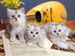 cute musical kittens