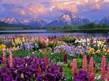Spring flowers - Water, Mountains, Flowers, Grass