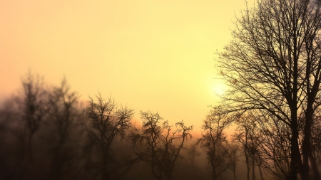 Trees in the Mist - autumn, sunset, trees, sky, fog, winter