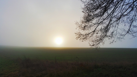 Fields of Mist - grass, sky, sunset, fog, field, tree
