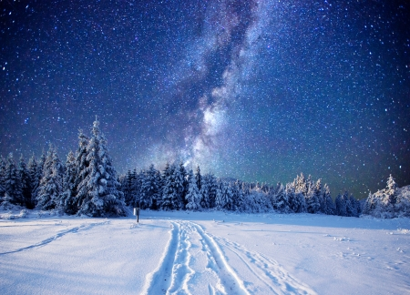 Winter - forest, stars, snow, trees, sky, meadow, winter
