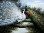 brilliant peacocks