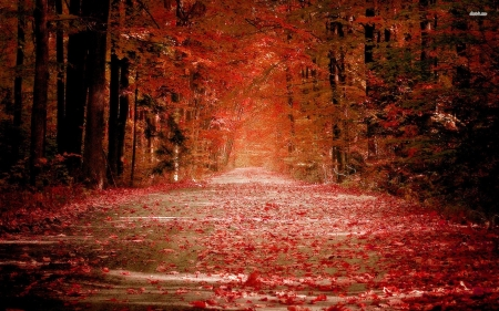 Forest - red, forest, warm, passage, sihouettes, trees, leaves, dark, shadows, nature, way, road, light