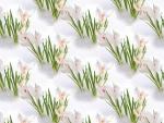 Spring texture