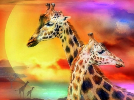Giraffe Couple - love, warmth, family, animals, moons, love four seasons, beloved valentines, colors, wildlife, giraffes