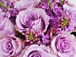 Roses and lilac