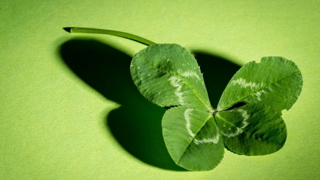 Lucky clover - green, clover, nature, plant