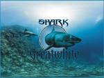 Greatwhite Shark