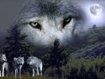 'Spirit of the wolf'.....