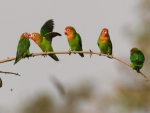cute little parrots
