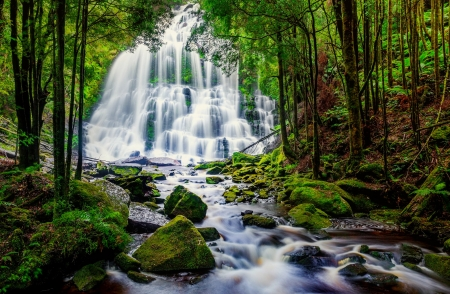 Forest waterfall - forest, stream, stones, waterfall, beautiful, creek, trees
