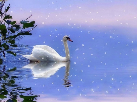 Snow Swan - snow, creative pre-made, winter, attractions in dreams, holidays, xmas and new year, love four seasons, swan, pond