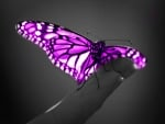 Fly, My Butterfly ♥