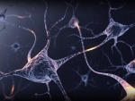 Brain Neurons