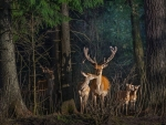 deer familly