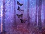Woodland Butterflies