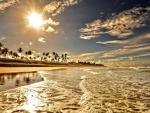 golden tide reaching the sandy shore