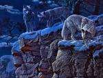 Night Camp at Wolf Canyon