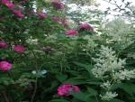 pink flowers on bush