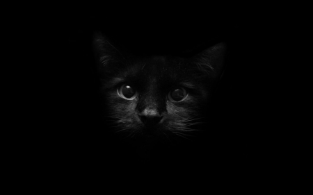 Black Kitten Cats Animals Background Wallpapers On Desktop Nexus Image 2075659