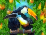 Toucans Lover
