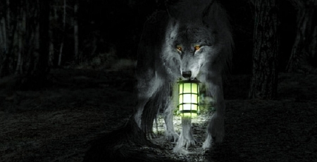 'Follow me....I'll light the way'..... - darkness, wolf, eerie, night, light