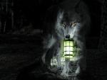 'Follow me....I'll light the way'.....