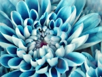 Beautiful Blue Blooms