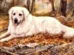 lovely autumn dog
