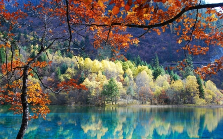 Reflection of Perfection - forest, nature, reflection, trees, lake