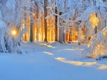 Sun in winter forest