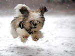 Running in the Snowfall