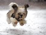 Running in the Snowfall