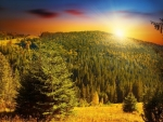 Colorful Sunset at Forest