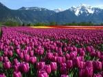 Springtime Fields