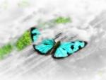 Butterfly World ♥