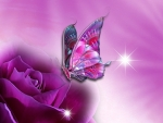 butterfly on purple rose
