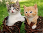Kittens in boots