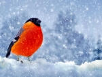 Bullfinch Standing in the Snowfall