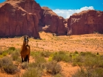 horse in monument valley arizona