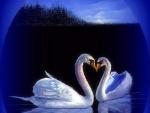 Kissing Swans