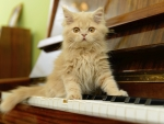 Kitty on piano keys