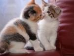 ~ ♥ღ Cats Love ღ♥ ~