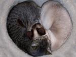 ~ ♥ღ Heart of Cats ღ♥ ~