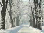 Woods road snow