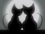 ~ ♥ღ Cats in Love ღ♥ ~