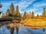 forest pond in autumn