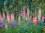 Foxtail Lilies and Friends