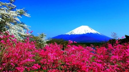 Mount Fuji in Spring - blossoms, japan, volcano, landscape