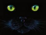 Black Cat F